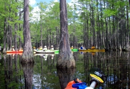 Canoe/Kayak the Ogeechee, Ohoopee, & Enchanted Forest Swamp
