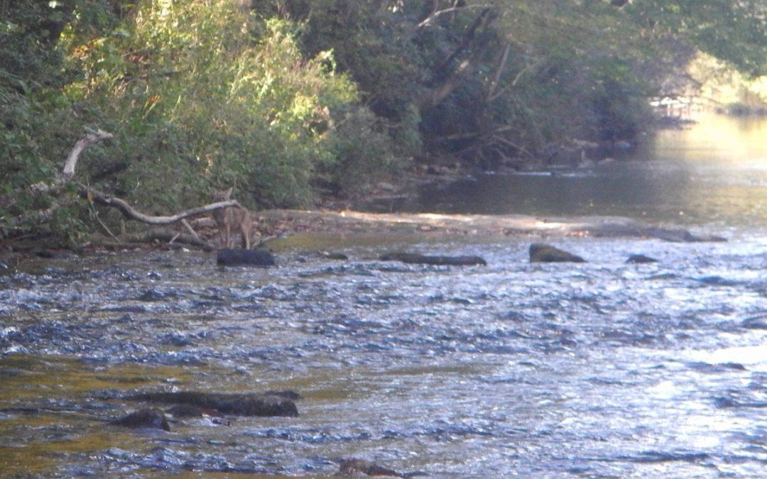 28th Annual GCA Chattooga River Cleanup