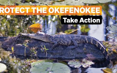 Take Action to Protect the Okefenokee